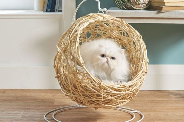 Aldi's Cat Egg Chair sold out in minutes, proving how much we love to spoil our cats