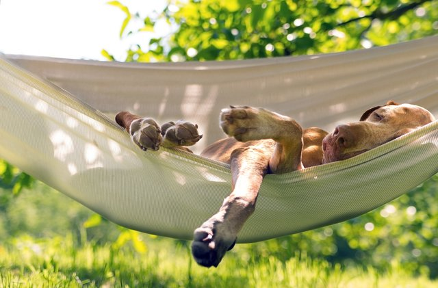 <p>How to keep dogs cool in the sunshine</p>