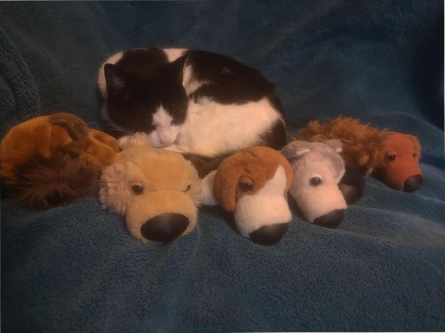 The owner of a real-life cat burglar who has been caught stealing cuddly toys in Eastmoor is appealing for help in returning the toys to their owner. Photo: Michelle Blacker