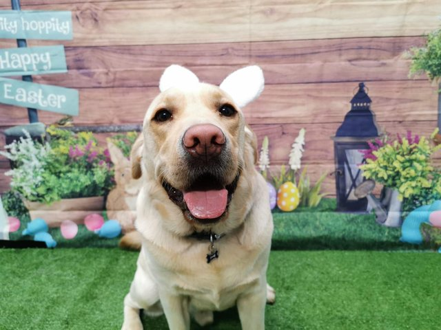 Dogs from Barkley & Co are dressed up for Easter.