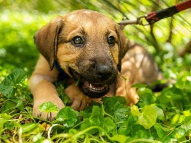 The dog welfare organisation has always urged potential new owners to avoid buying a puppy if the seller is offering to deliver it, as this allows rogue traders and puppy farms to hide horrific breeding conditions from view.
