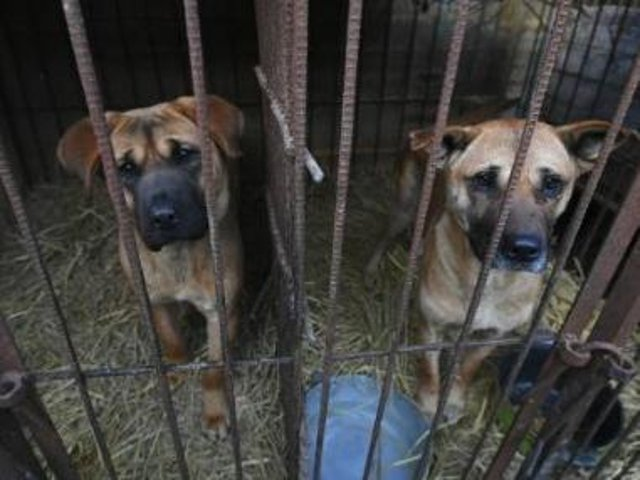 People who are found guilty of the worst cases of animal cruelty will face up to five years jail time under new law.