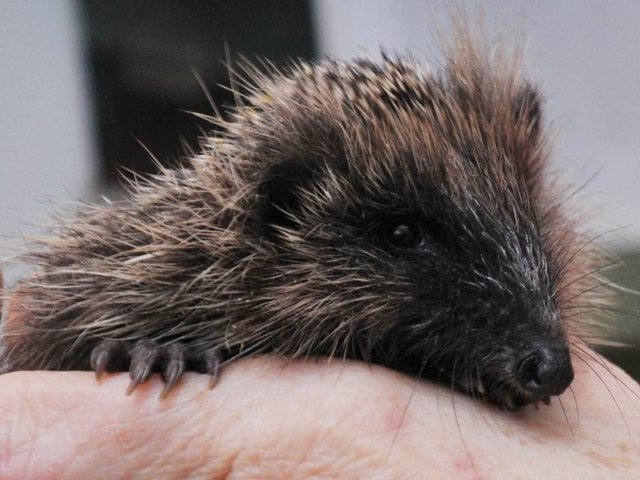 In the run-up to Hedgehog Awareness Week, Hannah Stephenson looks at what to avoid if you want to help these garden creatures.