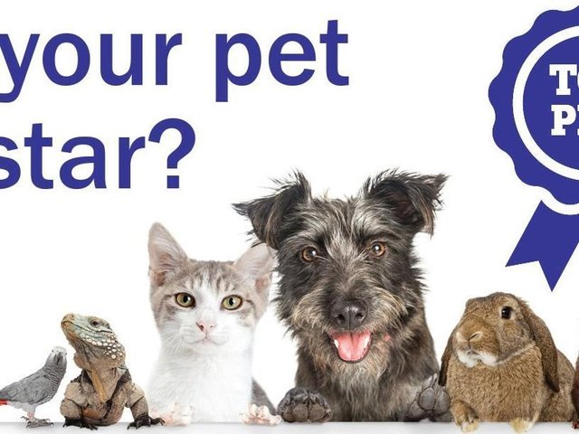 The winner will be crowned our Top Pet and scoop a £50 voucher.