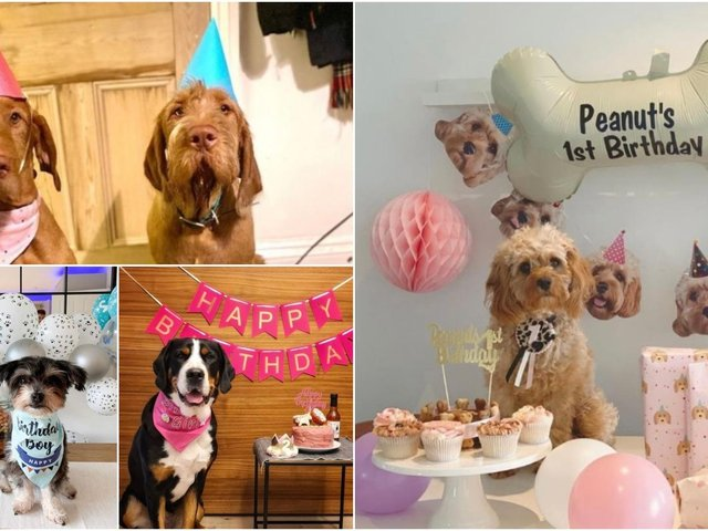 New research of the nation's dog owners has revealed as many as half admit they spend more on their pet's birthday than their own partner's, with 70 percent celebrating their canine companions' birthday every year.