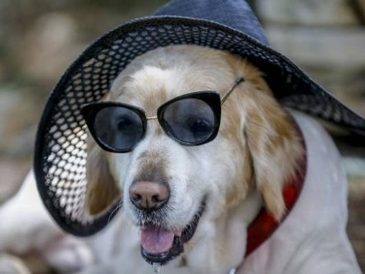 With warm temperatures and sunshine sweeping the country today, The Kennel Club is issuing a new warning to owners to protect their dogs during hot weather.