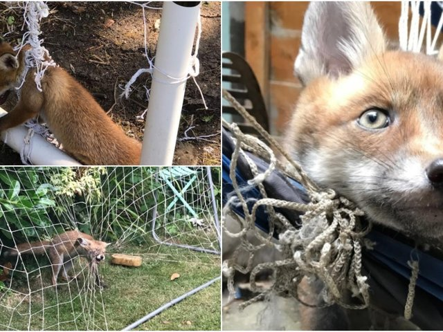 The RSPCA is warning of the dangers of netting to wildlife and is bracing itself to deal with hundreds of entanglement incidents this summer as fans get inspired by Euro 2020.