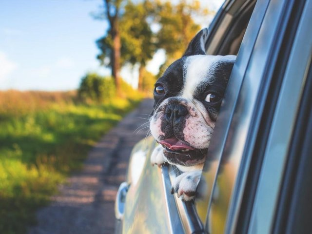 A dog sticking their head out of the window could cost you 3 points and a £2,500 fine